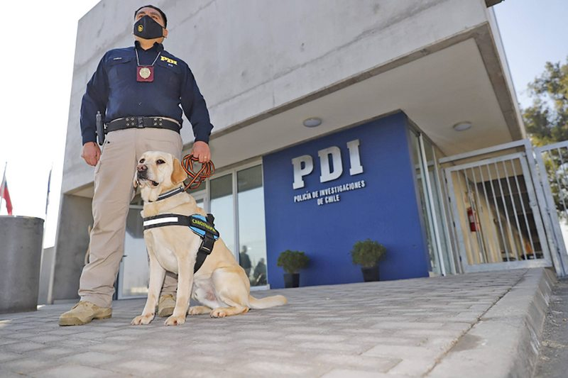 PDI abre postulaciones para ser asistente policial