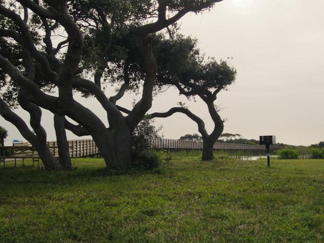 Gulf State Park trail
