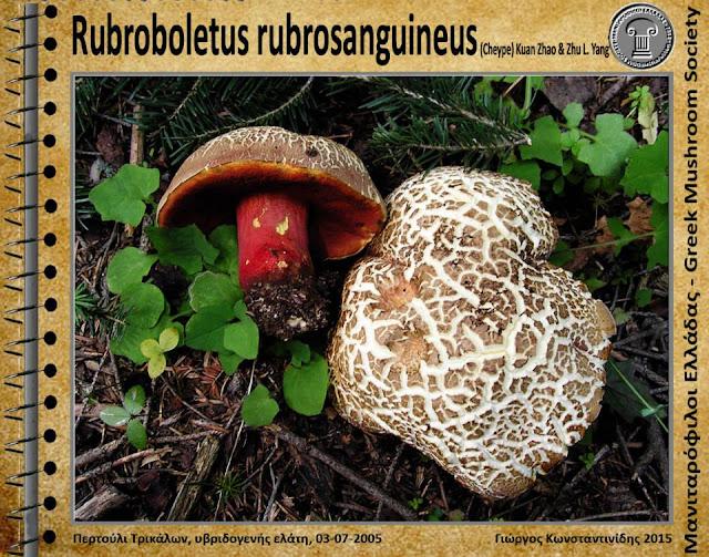 Rubroboletus rubrosanguineus (Cheype) Kuan Zhao & Zhu L. Yang