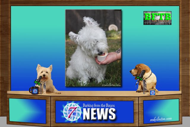 BFTB NETWoof News with two dogs