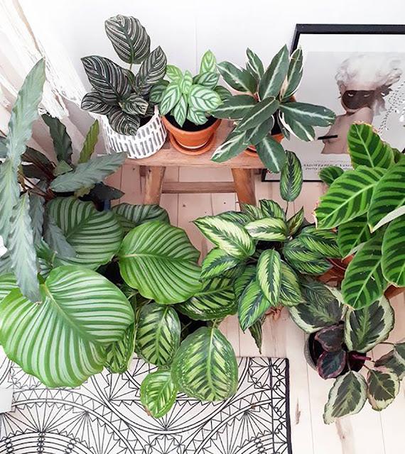 plantas-estampadas-blog-abrir-janela