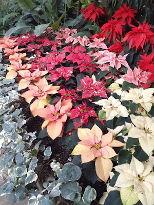 Allan Gardens Conservatory 2019 Winter Flower Show twentyfour by garden muses--not another Toronto gardening blog