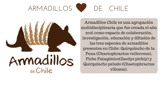 Armadillos Chile