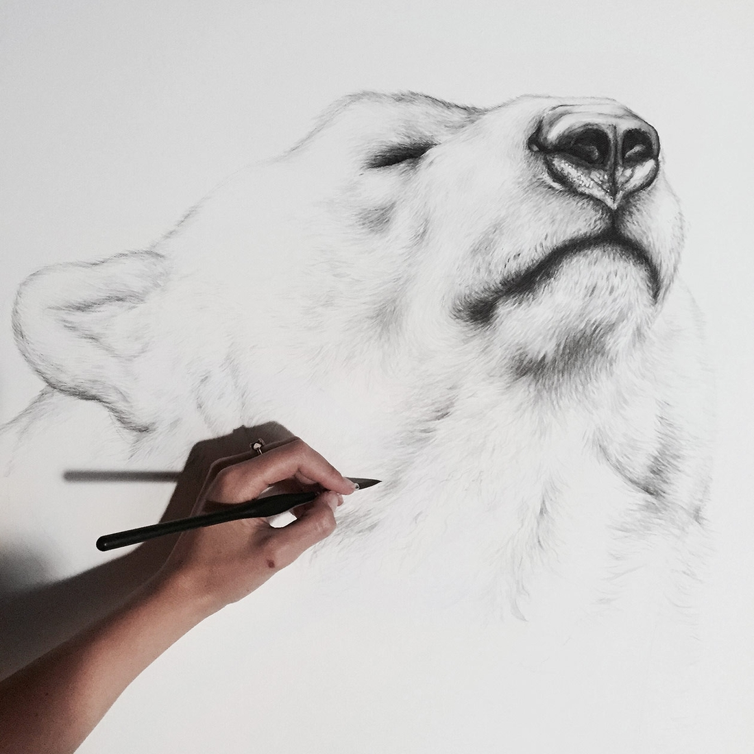 06-Polar-Bears-Detail-Jaimee-Paul-Mixed-Media-Animal-Drawings-and-Paintings-www-designstack-co