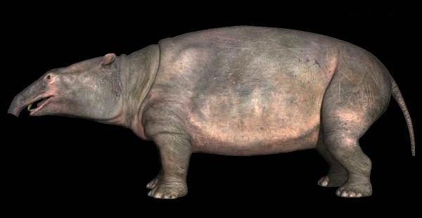 Prehistoric animals: Moeritherium, the ancestor of the ...