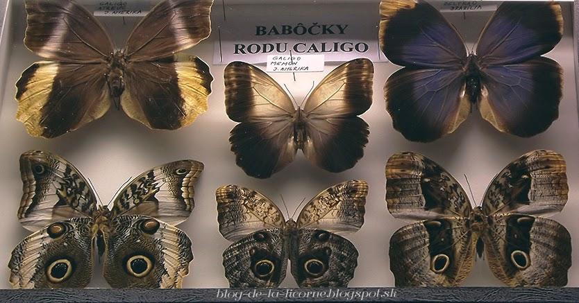 Botanická záhrada, Košice, motýle blog-de-la-licorne