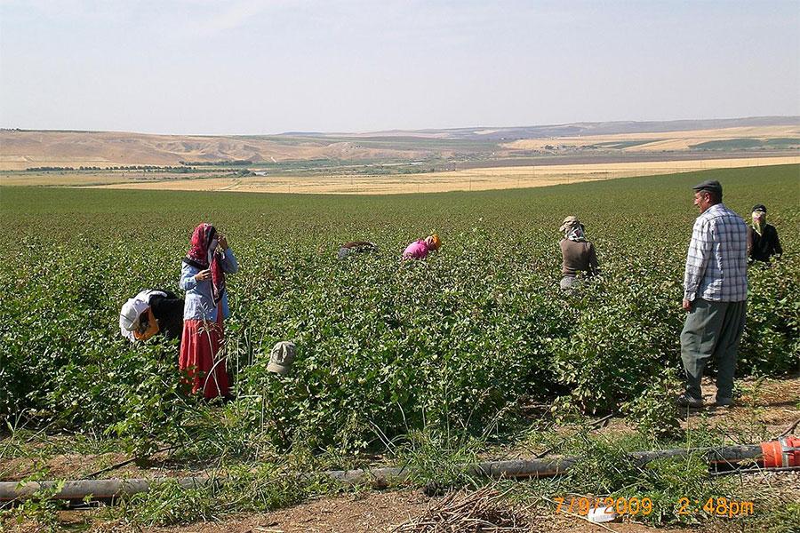 Diyarbakır'da çiftçilere 233 milyon bitkisel üretim destekleme ödemesi yapıldı