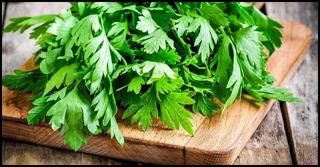 Known Positive Effects Of Cilantro In Our Body