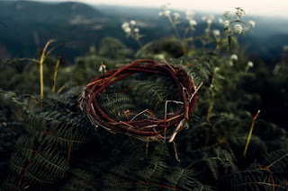 Crown of Thorns - Photo by Samuel Lopes on Unsplash