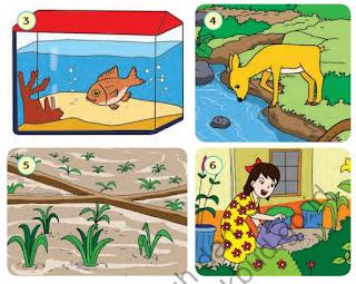 Referensi Buku Kurikulum 2013 Untuk SD Kelas 5 Kemendikbud