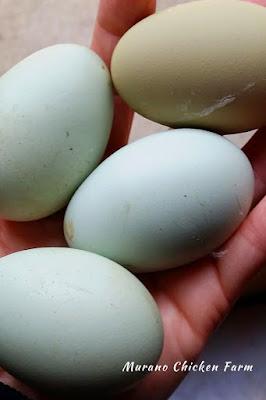 Blue eggs.