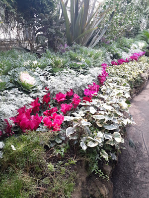 Allan Gardens Conservatory 2019 Winter Flower Show five by garden muses--not another Toronto gardening blog