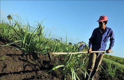 Argos y Bancolombia entre las empresas condenadas a devolver predios despojados a los campesinos