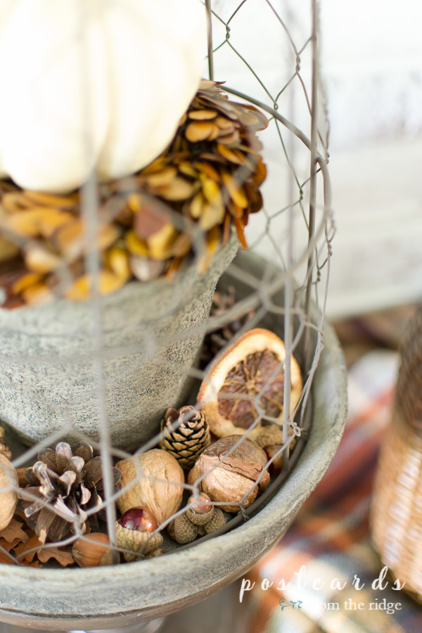 nuts, acorns, and pine cones under a chicken wire cloche