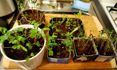 Soal Pertumbuhan dan Perkembangan Tumbuhan & Jawaban