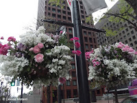 Pink and white flowers in hanging baskets on a street near Tokyo Imperial Gardens, Japan