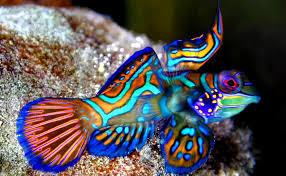 Inilah 7 Jenis Ikan Hias Air Tawar Terindah