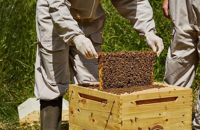 Όροι και προϋποθέσεις για τη Λειτουργία Κέντρων Μελισσοκομίας