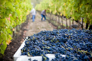 grape harvest - Photo by Lasseter Winery on Unsplash