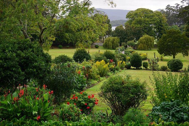 Pelargonium, Solidago, Canna and Bergenia en Port Arthur Historic Sites, Tasmania, Australia