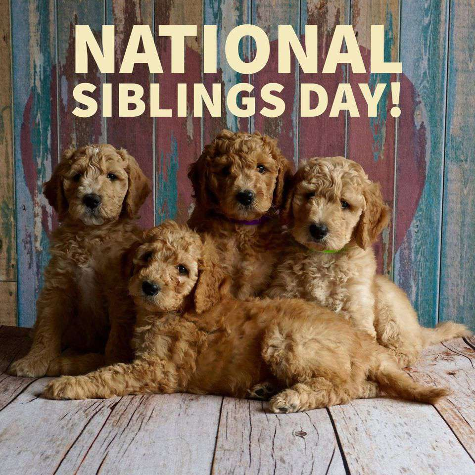 National Siblings Day Wishes for Whatsapp