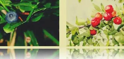 top cele mai bune plante medicinale din romania benefice si folositoare