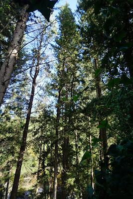 עצים בנחל השופט