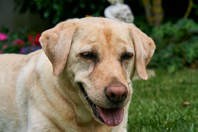 Stomatitis In Dog