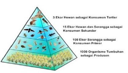 Gambar Piramida jumlah - Sumber: mudahbiologi.blogspot.com