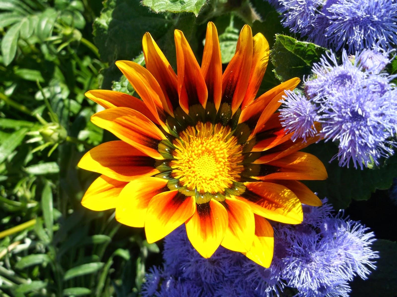 Картинки садовых цветов по алфавиту с фото
