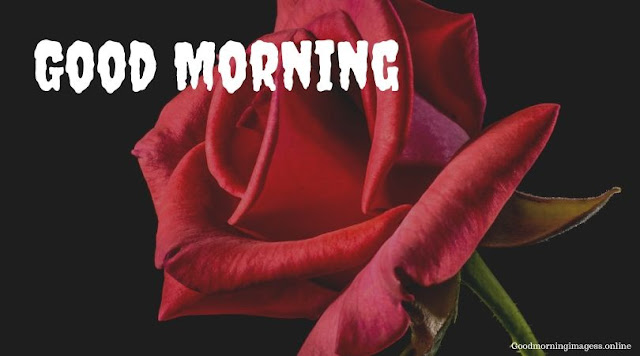 Good Morning Images In Roses 16