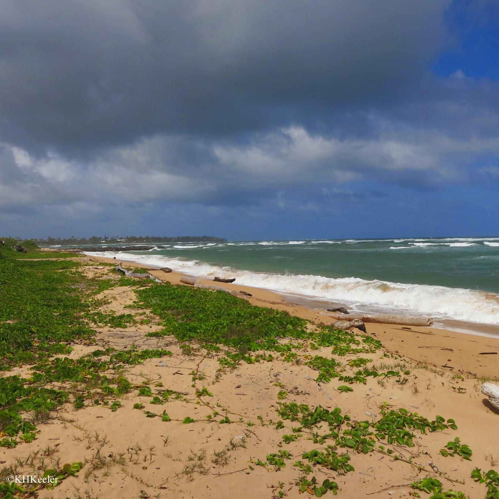 Kauai Beach: A Wandering Botanist: Visiting Kauai