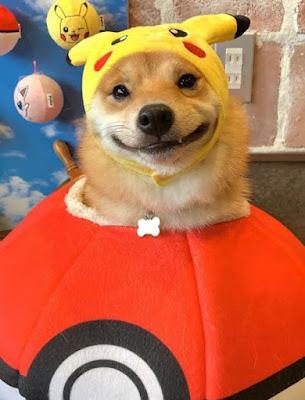 Connaissez-vous UNI, le chien qui ne peut s'empêcher de sourire quand il voit de la nourriture.