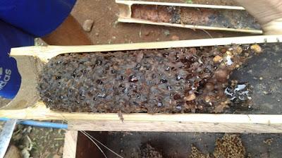 manfaat madu hutan asli