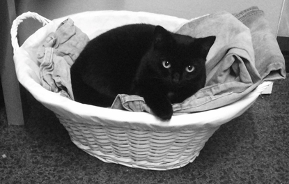 black cat laying in a laundry basket