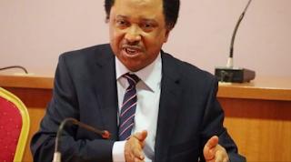 'Progressives shouldn't be afraid of revolution' — Shehu Sani taunts APC
