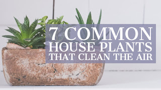 7 Common House Plants That Clean the Air