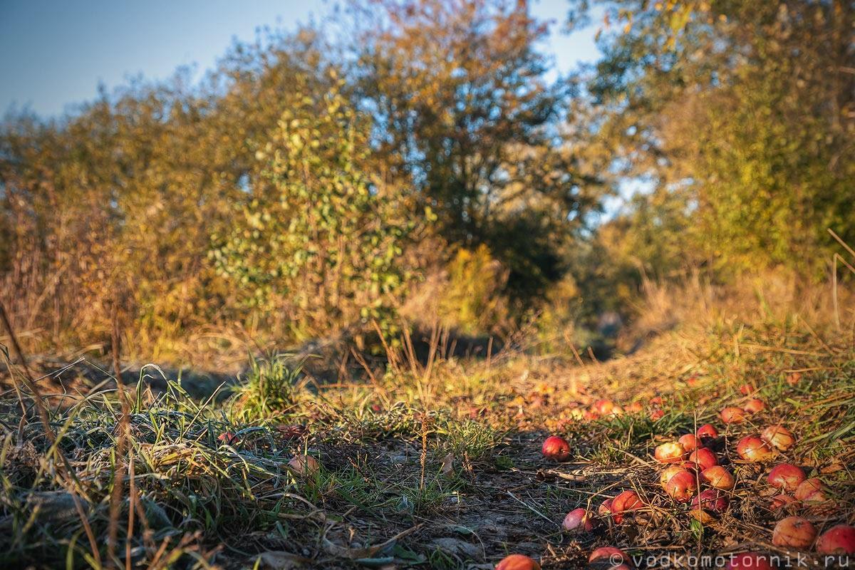 Яблоки на автобане Домнау - Фридланд
