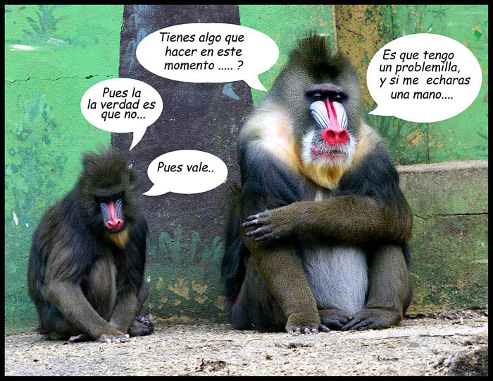Frases De Mono: Imagenes Chistosas De Changuitos