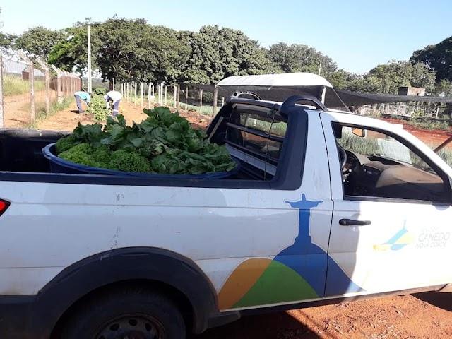 Senador Canedo: Colheita de folhagens marca nova fase do Projeto Agricultura Urbana