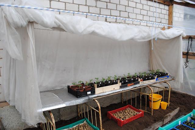 Külvatud taimede soojas hoidmine kasvuhoones