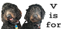 Goldendoodles: Vets