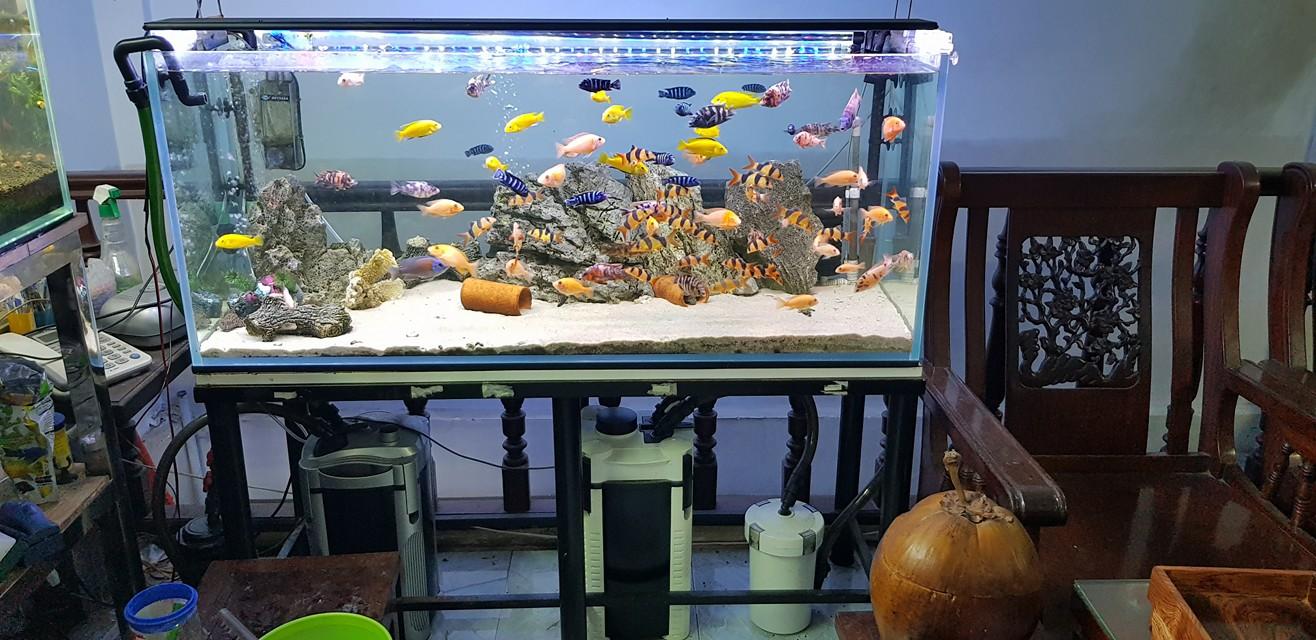 Bể cá ali sử dụng 2 lọc thùng Atman