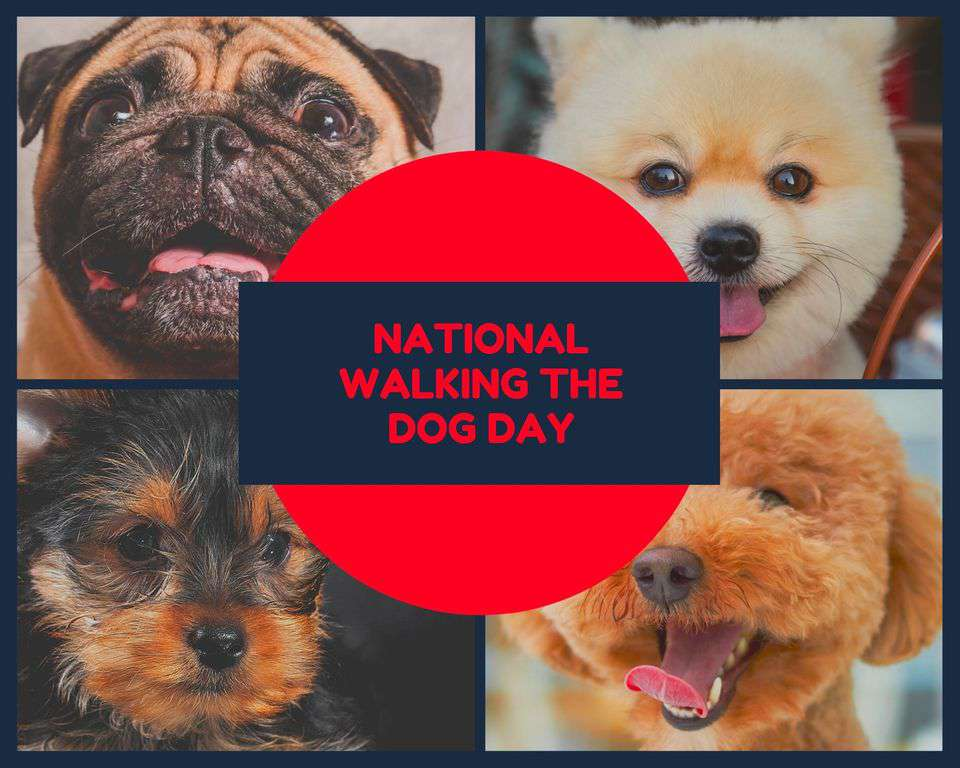 National Walking the Dog Day Wishes Lovely Pics