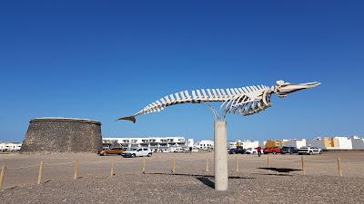 scheltro fossile