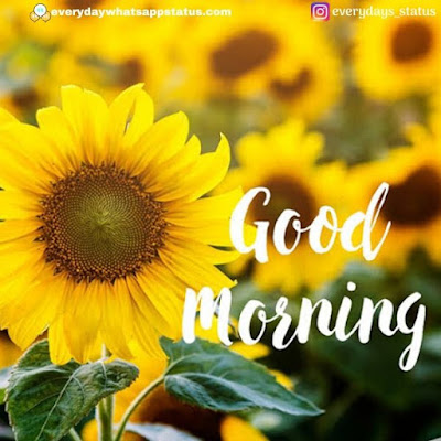 good morning wishes | Everyday Whatsapp Status | Unique 20+ Good Morning Images With Quotes