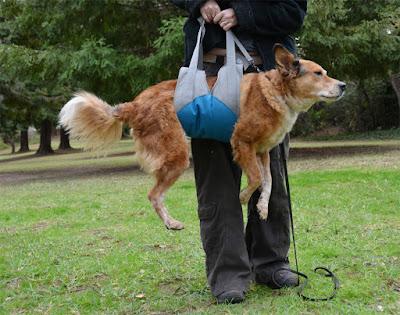 dog mobility sling