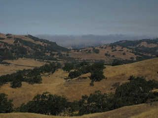 Golden hills studded with trees, fog layer in the distance.