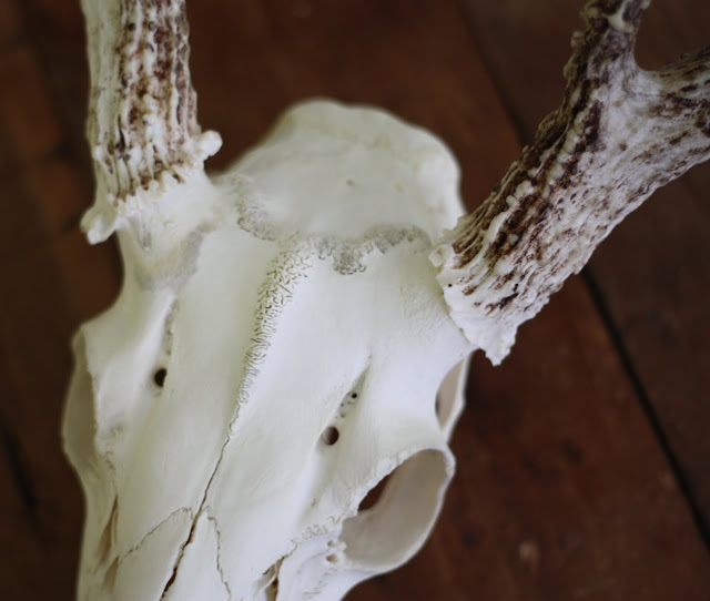 How To Clean And Wall Mount Deer Antlers 17 Apart
