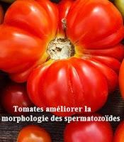 Tomates améliorent la morphologie des spermatozoïdes égale santé sexuelle